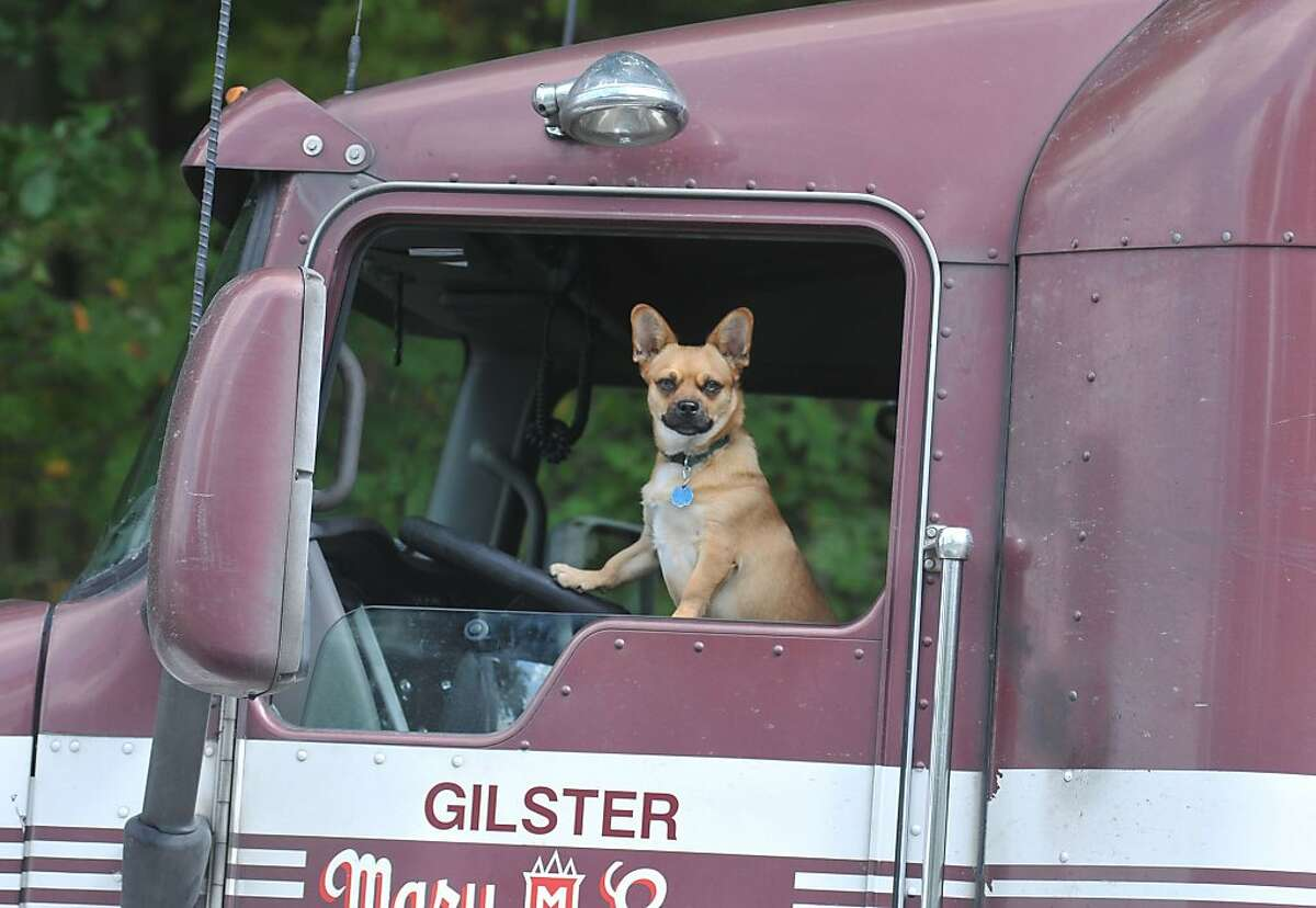'Bow-wow,' good buddy: A dog keeps a watchful eye from a big rig cab as members of the Crater Regional Haz-Mat Team investigate a potential hazardous material on U.S. Route 460 in Prince George County, Va.
