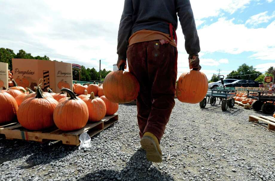 Worker Roy Thompson works on displays of pumpkins for sale Monday afternoon, Sept. 23, 2013, at the Golden Harvest Orchards in Valatie, N.Y.    (Skip Dickstein / Times Union) Photo: Skip Dickstein