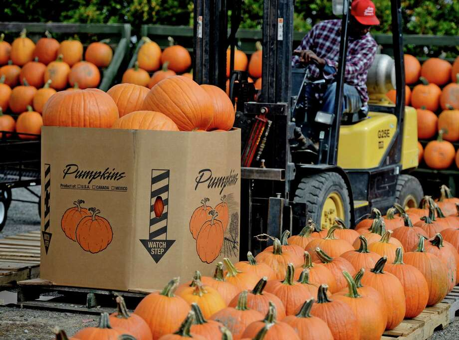 Foreman John Henry  brings out pumpkins which were being displayed for sale Monday afternoon, Sept. 23, 2013, at the Golden Harvest Orchards in Valatie, N.Y. Fall began last Sunday.  (Skip Dickstein / Times Union) Photo: Skip Dickstein