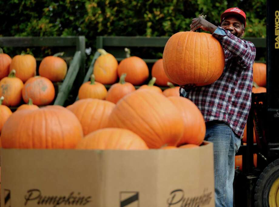 Foreman John Henry hoists a very large pumpkin that was put out for sale on the first full day of fall Monday afternoon, Sept. 23, 2013, at the Golden Harvest Orchards in Valatie, N.Y. (Skip Dickstein / Times Union) Photo: Skip Dickstein