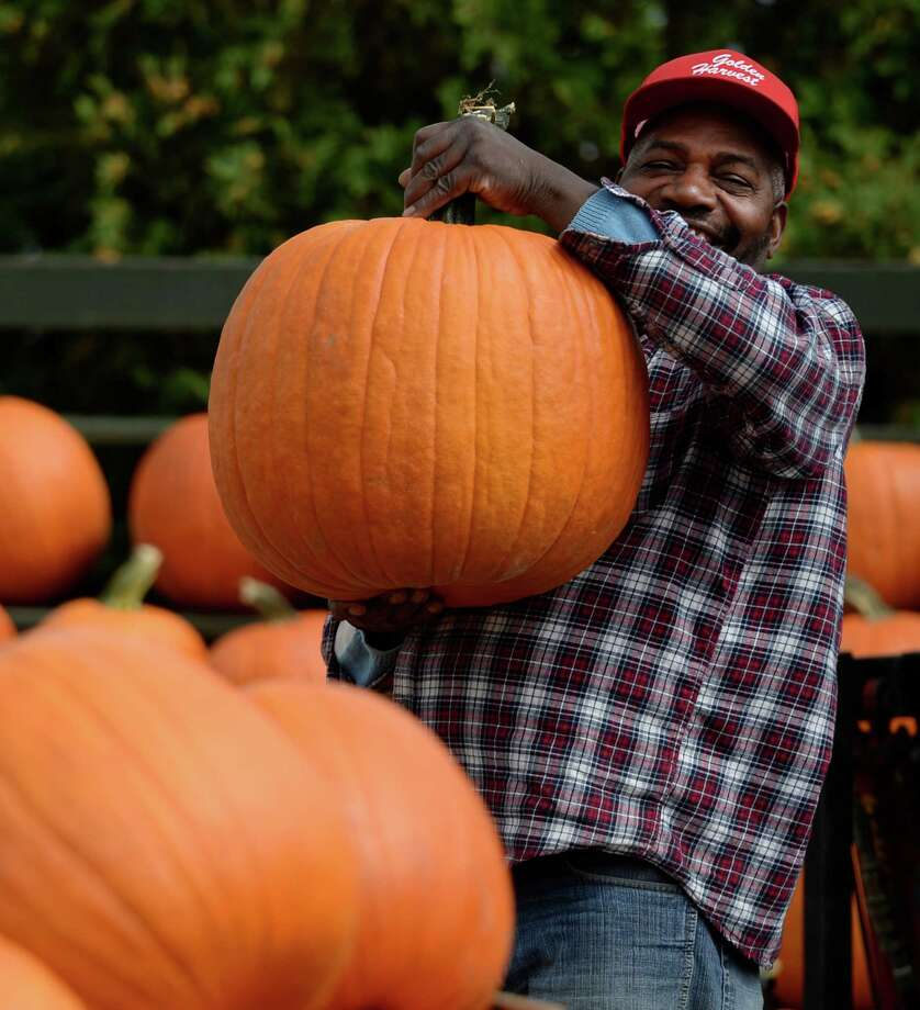 Foreman John Henry hoists a very large pumpkin that was put out for sale Monday afternoon, Sept. 23, 2013, at the Golden Harvest Orchards in Valatie, N.Y. (Skip Dickstein / Times Union) Photo: Skip Dickstein