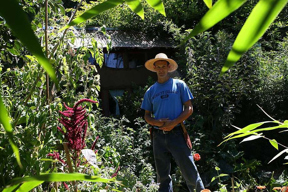 Permaculture expert Christopher Shein says his backyard food forest takes less effort to manage, which means more time with daughter Gitanjali Victoria. Photo: Liz Hafalia, The Chronicle