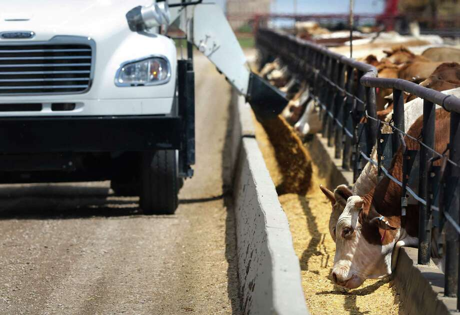 A truck delivers feed for cattle. Some feedlots have given their cattle Zilmax, which can help them gain about 30 pounds of muscle in 20 days, according to Merck, the drug's manufacturer. Photo: Bob Owen, Staff / © 2012 San Antonio Express-News