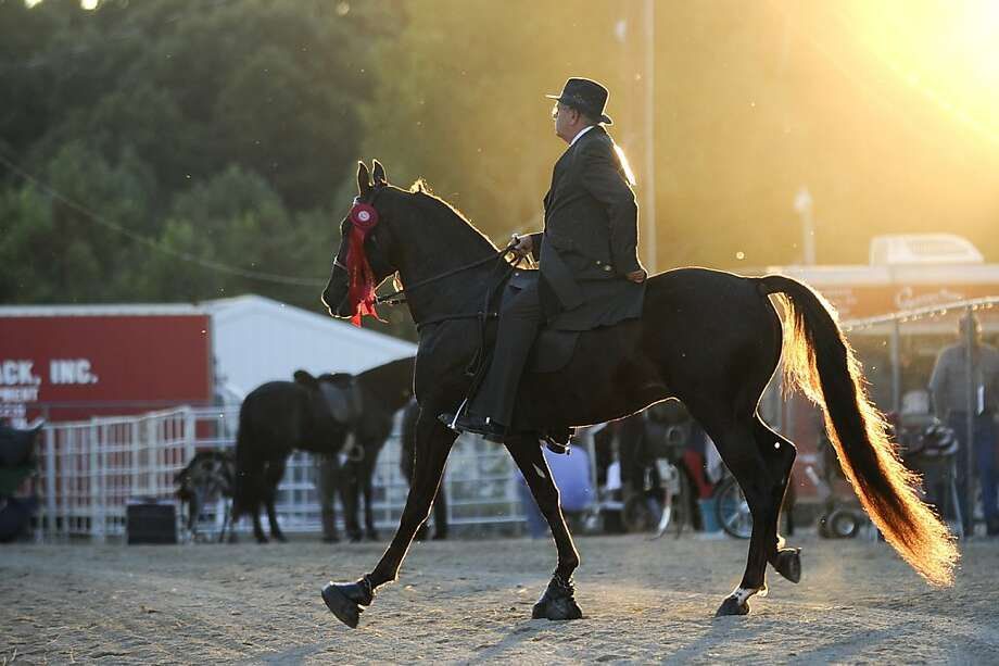 A winner of a red ribbon exits the arena after his performance in the Racking Horse World Celebration at the Morgan County Celebration Arena in Priceville, Ala. Sunday, September 22, 2013. The celebration runs through Saturday night, when the world grand championship will be decided.  (AP Photo/The Decatur Daily,Jeronimo Nisa) Photo: Jeronimo Nisa, Associated Press