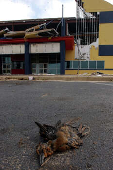 A dead bird lies in front of the Hollywood Theater at Parkdale Mall in Beaumont, Texas on Monday, Sept 26, 2005, after its front was destroyed Saturday by Hurricane Rita.