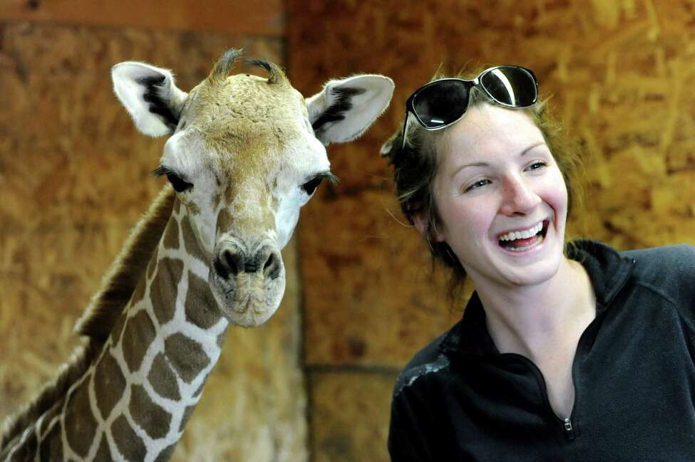 Veterinarian Caitlin Jeffrey of Midvale Vet Clinic in Nelliston meets Autumn, a newborn giraffe, on Tuesday, Sept. 24, 2013, at Adirondack Animal Land in Gloversville, N.Y. Autumn weighs in a 135 pounds, measures at 6 foot 3 inches and was born Sunday at 11:15 a.m. (Cindy Schultz / Times Union)
