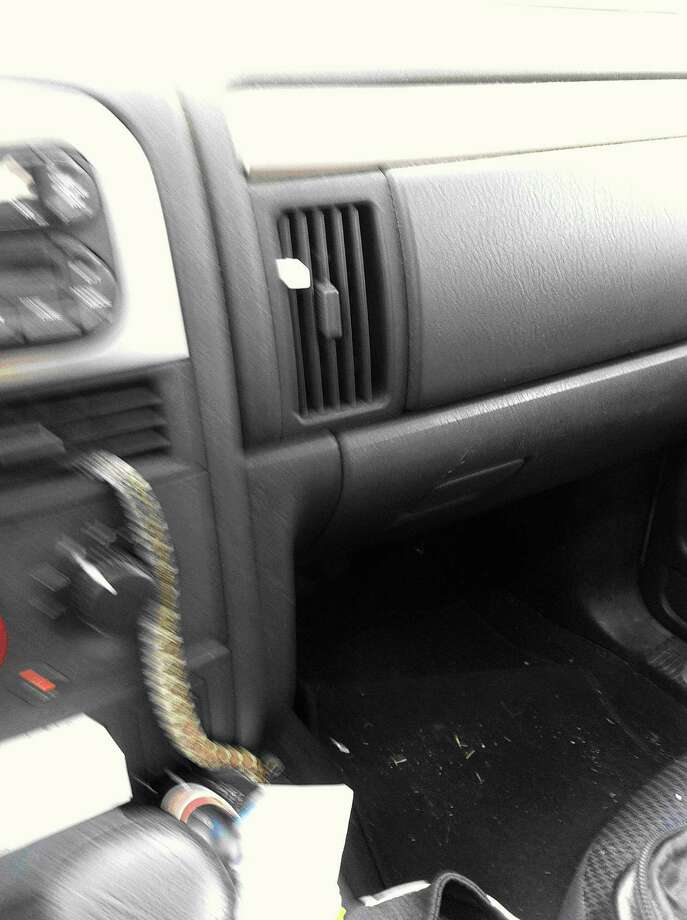 """Charlene Fuller shot this photo of a snake dropping in from her auto air-conditioner vent. Fuller wrote, """"Please excuse the blurry picture. My hand was shaking, and I was driving down the road."""" Photo: Courtesy Photo"""