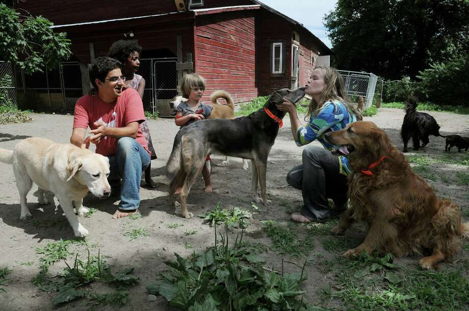 Will Pflaum, left, and his wife Aenne Grannis, right, along with their children, Lotta, 5, second from left, and  Leo, 3,  play with the dogs inside the enclosure at their business the Glencadia Dog Camp on Wednesday, June 27, 2012 in the Town of  Stuyvesant, NY.  Pflaum and Grannis own and operate the dog camp.    (Paul Buckowski / Times Union) Photo: Paul Buckowski / 00018254A