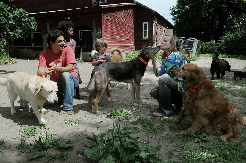 Will Pflaum, left, and his wife Aenne Grannis, right, along with their children, Lotta, 5, second from left, and Leo, 3, play with the dogs inside the enclosure at their business the Glencadia Dog Camp on Wednesday, June 27, 2012 in the Town of Stuyvesant, NY. Pflaum and Grannis own and operate the dog camp. (Paul Buckowski / Times Union)