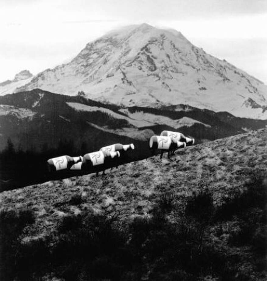 """Who remembers the Rainier Beer ads of croaking frogs, the """"RainBeer"""" herd, and its namesake mountain? (Nostalgic videos below.)   This ad with Mount Rainier in the background ran in the '70s. Photo: P-I File / P-I file"""