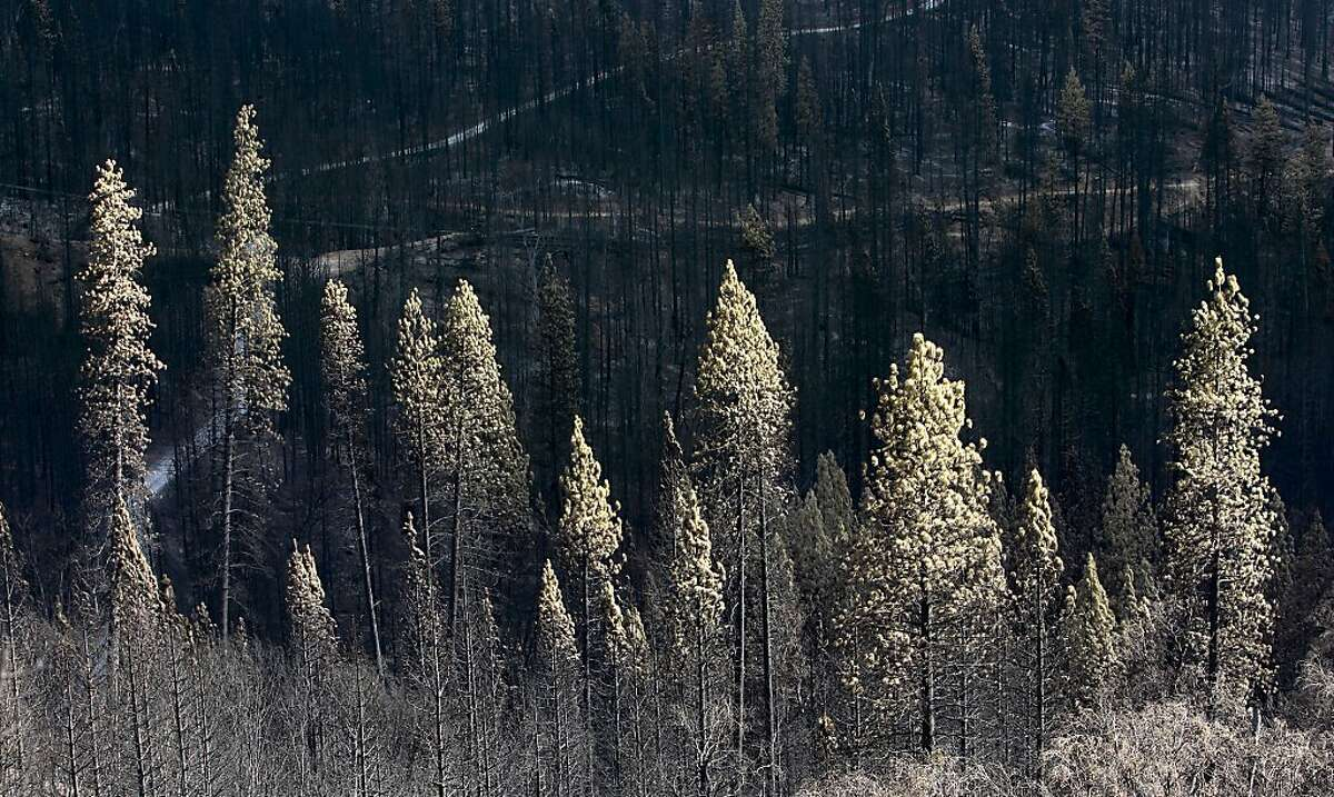 Barren hillsides and burned trees along Cherry Lake road near Groveland, Calif., on Wednesday Sept. 25, 2013, following the massive Rim Fire which erupted on August 17, 2013 and has burned more than 257,000 acres.
