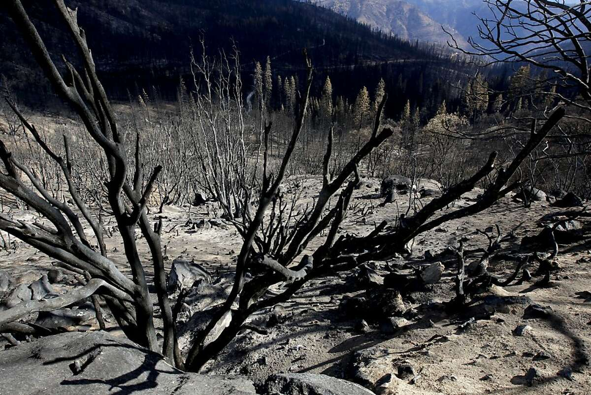 Burned hillsides along Cherry Lake Road near Groveland, Calif., on Wednesday Sept. 25, 2013, following the massive Rim Fire which erupted on August 17, 2013.