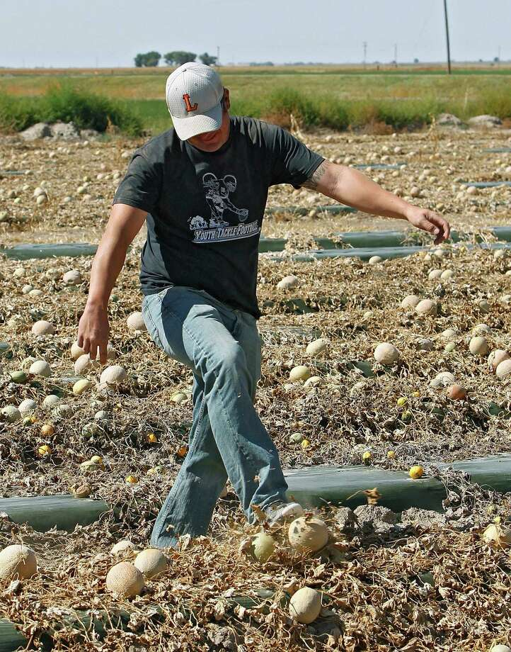 Owner Eric Jensen kicks a cantaloupe as he walks through a field on the Jensen Farms near Holly, Colo., in this Sept. 28, 2011, file photo.  Jensen, 37, and his brother, Ryan Jensen, 33, owners of the Colorado cantaloupe farm were arrested Thursday on charges stemming from a 2011 listeria epidemic that killed 33 people in one of the nation's deadliest outbreaks of foodborne illness. Photo: AP