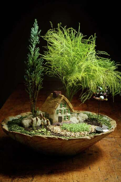 Dwarf cedar, a tree fern, 'Elfin' thyme and reindeer moss grace Emily Wilde's Chalet, an enchanting fairy garden in a container. Chopped parsley edges the container, and lentils, split peas and lotus pods add interest. Photo: Michael Paulsen, Staff / © 2013 Houston Chronicle