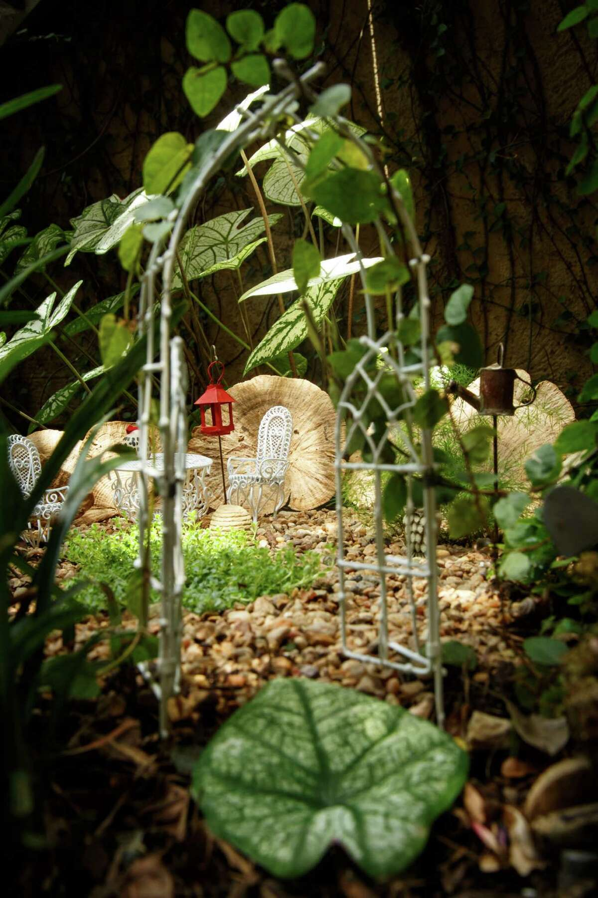 The tiny trellis draped in fig ivy is the entrance to the Caladium Forest, a fairy garden planted near the Wilde patio. Polka dot plant, miniature ming fern and 'Elfin' thyme are included in the small space. ( Michael Paulsen / Houston Chronicle )
