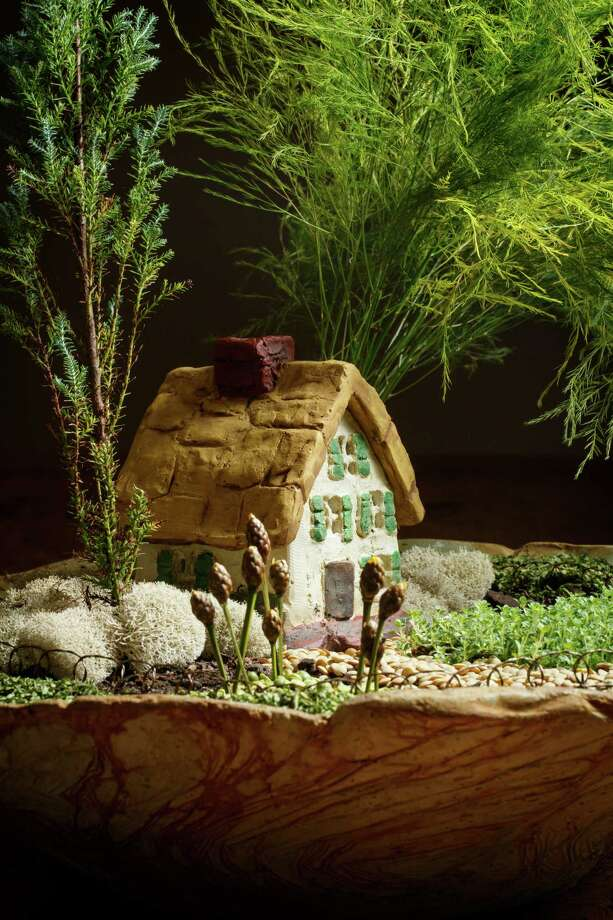 Emily Wilde's enchanting Chalet fairy garden includes dwarf cedar, tree fern, 'Elfin' thyme, reindeer moss,  lotus pods, chopped parsley around the edge of pot, lentils and split peas.  ( Michael Paulsen / Houston Chronicle ) Photo: Michael Paulsen, Staff / © 2013 Houston Chronicle