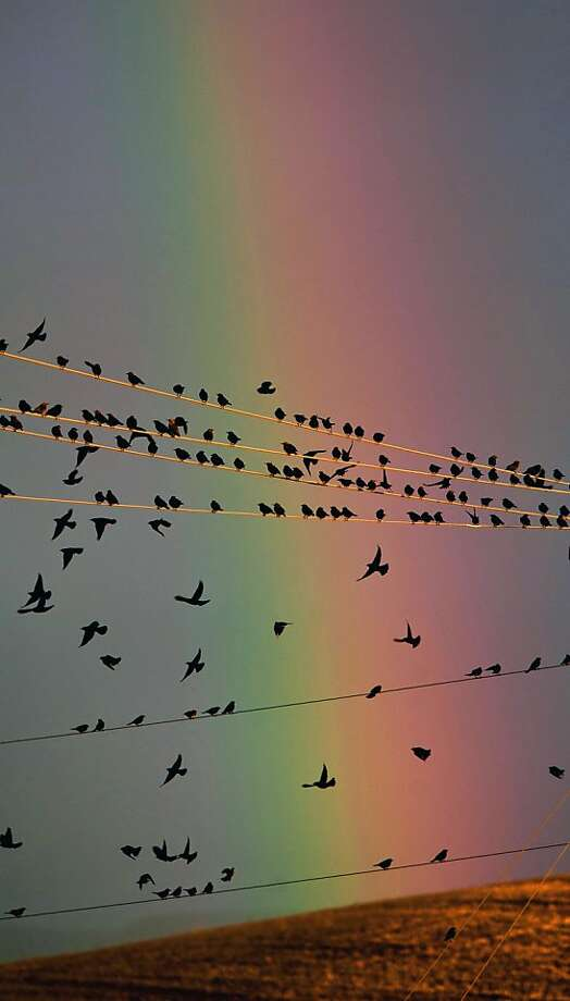 Birds view a rainbow from a power line perch north of Walla Walla, Wash. Photo: Greg Lehman, Associated Press