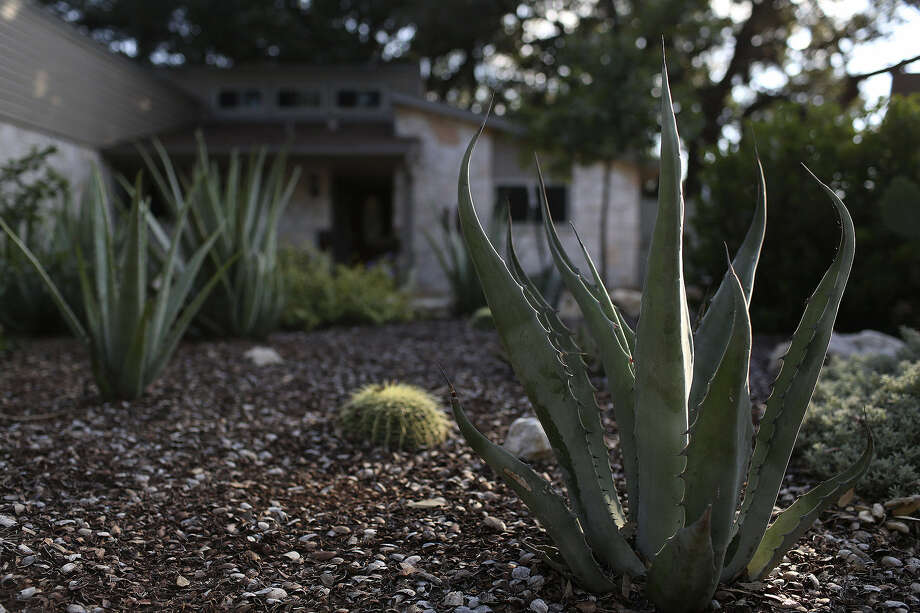 Norm and Debbie Bale removed grass and added drought-tolerant plants. Photo: Lisa Krantz / San Antonio Express-News
