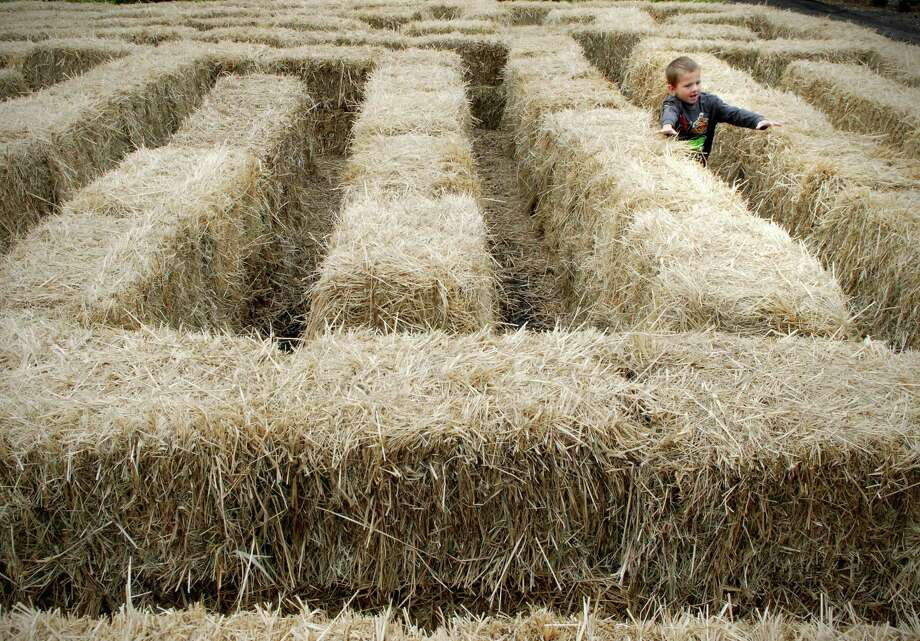 Jake Hill (4) works his way through the hay bale maze at Eden Farms in Stamford, Conn. on Friday September 27, 2013. Photo: Dru Nadler / Stamford Advocate Freelance