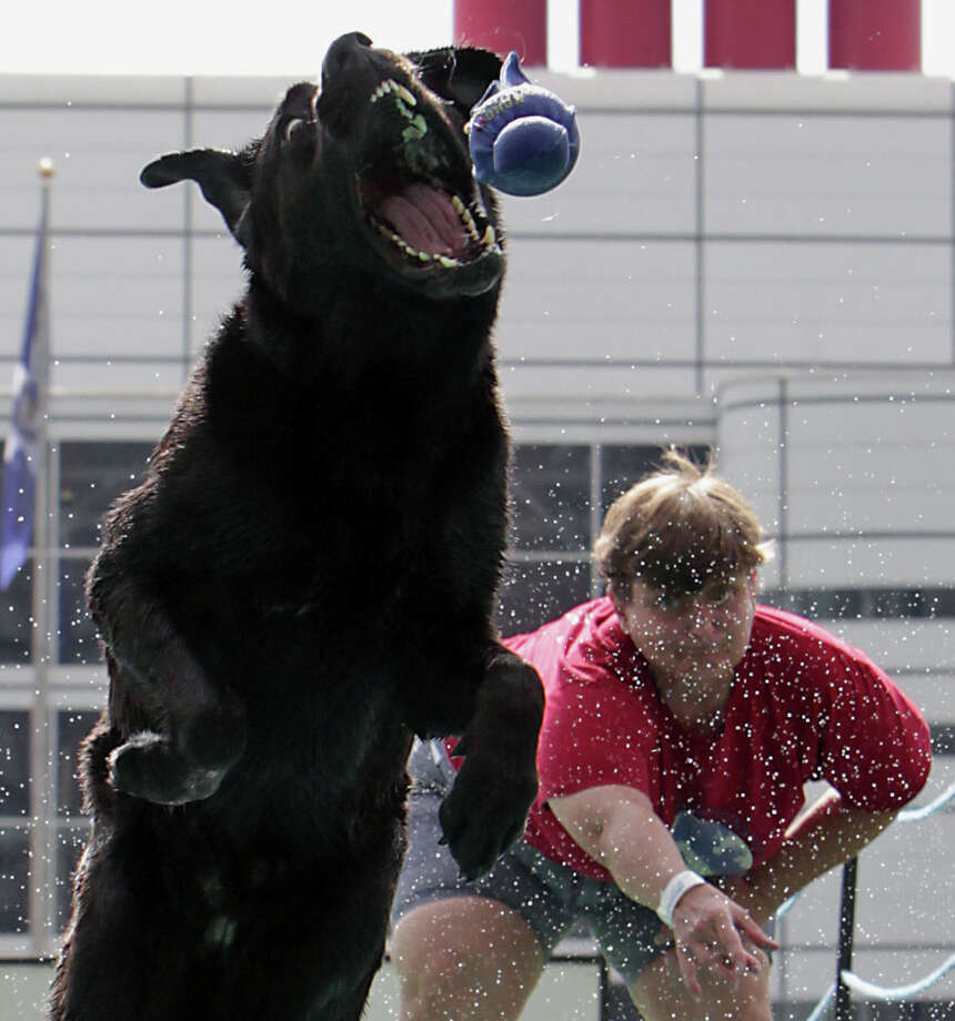 "Sandy Goodson and her Labrador retriever ""Harley"" compete during the sixth annual DockDogs competition DockDogs at Discovery Green Friday, Sept. 27, 2013, in Houston. The competition events include high-jump, long-jump and speed retrieve events running from a 20-foot dock and leaping into a 40-foot pool of water. Photo: James Nielsen, Houston Chronicle / © 2013  Houston Chronicle"
