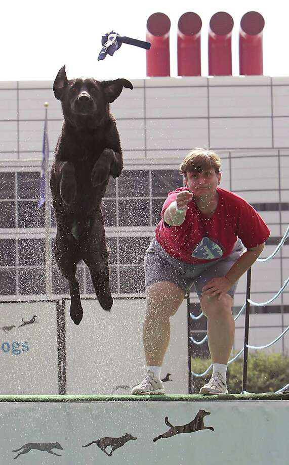 "Sandy Goodson and her Labrador retriever ""Harley"" compete during the sixth annual DockDogs competition DockDogs at Discovery Green Friday, Sept. 27, 2013, in Houston. Photo: James Nielsen, Houston Chronicle / © 2013  Houston Chronicle"