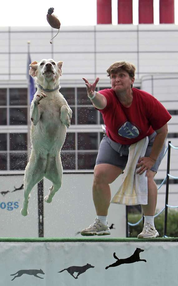 "Sandy Goodson and her Labrador retriever ""Lizzie"" compete during the sixth annual DockDogs competition DockDogs at Discovery Green Friday, Sept. 27, 2013, in Houston. Photo: James Nielsen, Houston Chronicle / © 2013  Houston Chronicle"