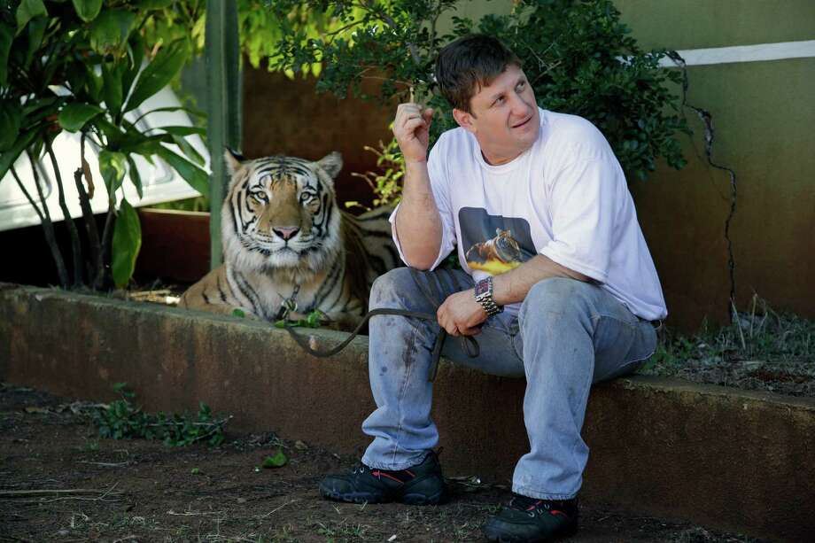 Ary Borges sits with one of his nine tigers in his backyard in Maringa, Brazil, Thursday, Sept. 26, 2013. Borges says it all started in 2005 when he first rescued two abused tigers from a traveling circus. He defends his right to breed the animals and says he gives them a better home than they might find elsewhere in Brazil. Photo: Renata Brito, Associated Press / AP
