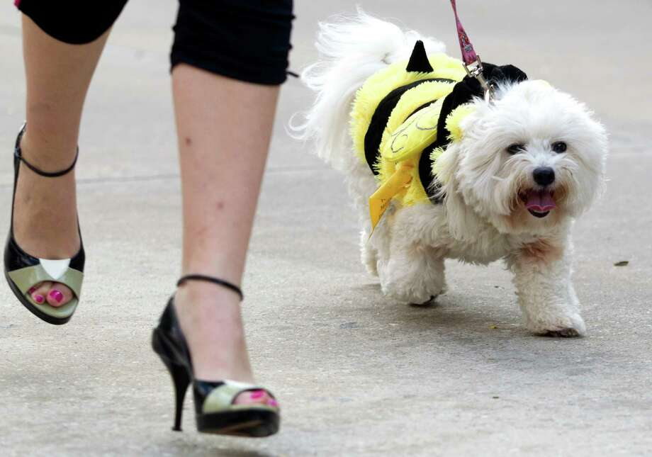 Stilettos and a pooch named Zoe stampede on Saturday, Sept. 28, 2013, in Sugar Land. Photo: J. Patric Schneider, For The Chronicle / © 2013 Houston Chronicle