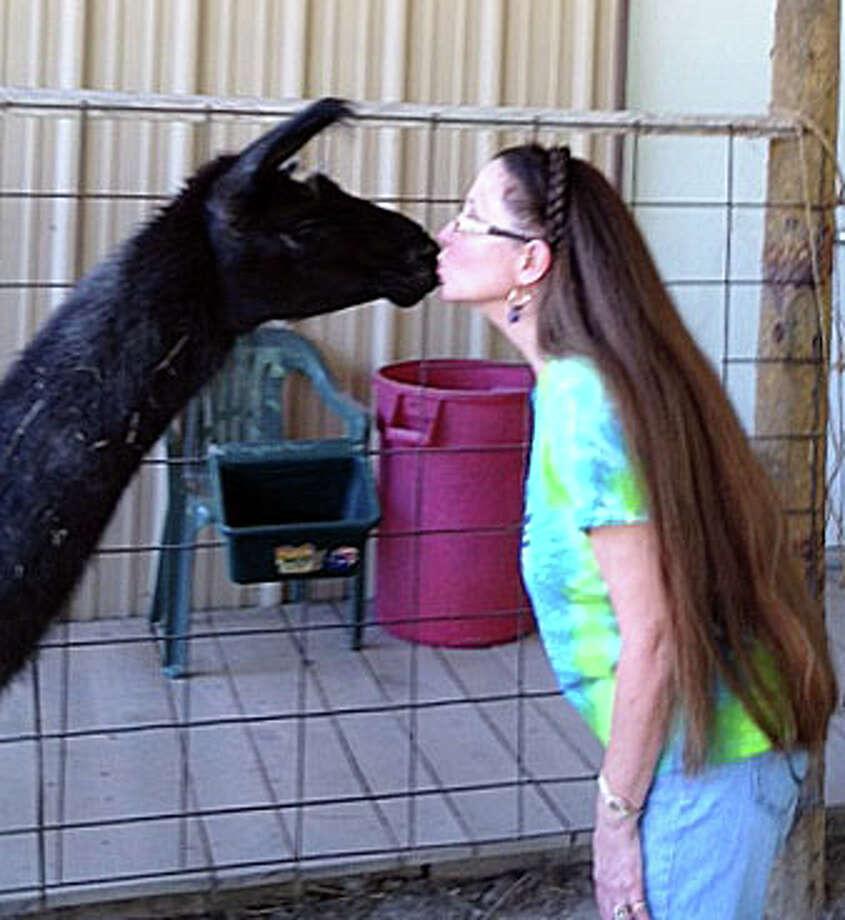"Linda Masters kisses a llama at the 53-acre La La Land Ranch south of Huntsville. ""Llamas are gentle, affectionate creatures."" Photo: Joe Holley, Houston Chronicle / © 2013 Houston Chronicle"
