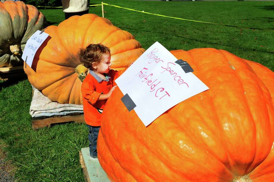 Isaac Boucher, 21-months-old checks out a giant pumpkin as the Connecticut Giant Pumpkin Growers Club holds their annual Giant Pumpkin and Squash Weighoff in Ridgefield, Conn. Sunday, Sept. 29, 2013. Photo: Michael Duffy / The News-Times