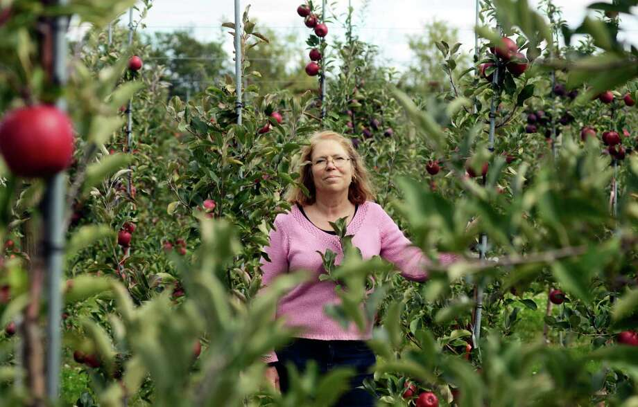 Cornell University faculty leader in the apple breeding program, Dr. Susan Brown, stands in an apple orchard at the Cornell University's Fruit and Vegetable Research Farm in Geneva, N.Y., Monday, Sept. 23, 2013. (AP Photo/Heather Ainsworth)   ORG XMIT: NYHA202 Photo: Heather Ainsworth, AP / FR120665 AP