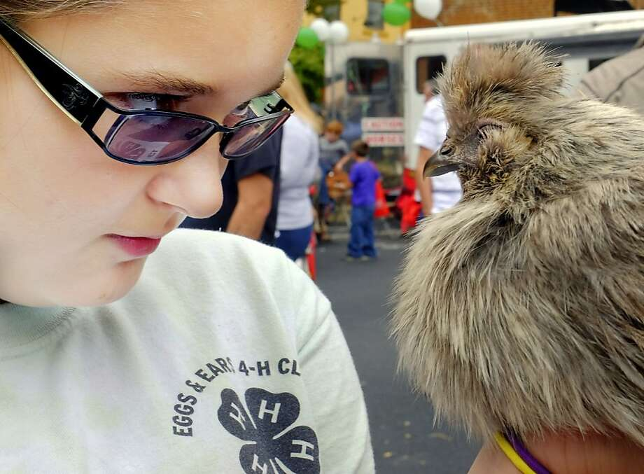 Can she outduel a chicken? Eleven-year-old Gabby Osborne stares at Frostie as the Blue Ears Silkie stares back during the Main Street Agriculture event in Winchester, Va. Who will blink first? Photo: Scott Mason, Associated Press