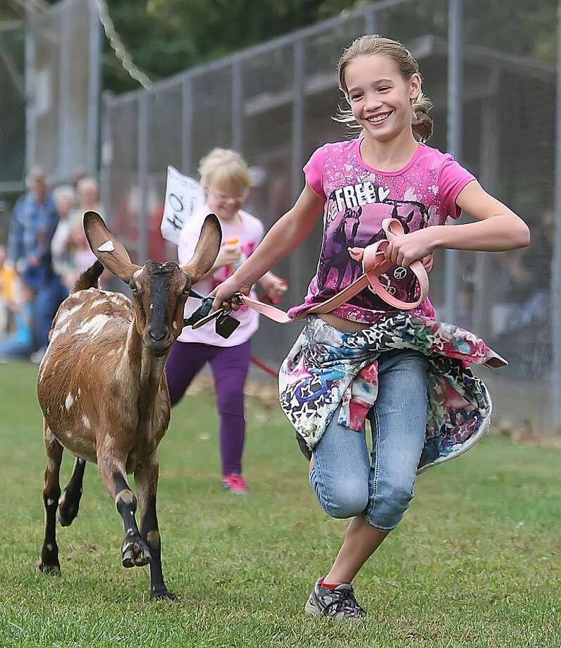 Leash with an option to buy: Nine-year-old Claire Laur runs with her rented goat during the Falmouth Goat Races in Falmouth, Pa. Photo: Vinny Tennis, Associated Press