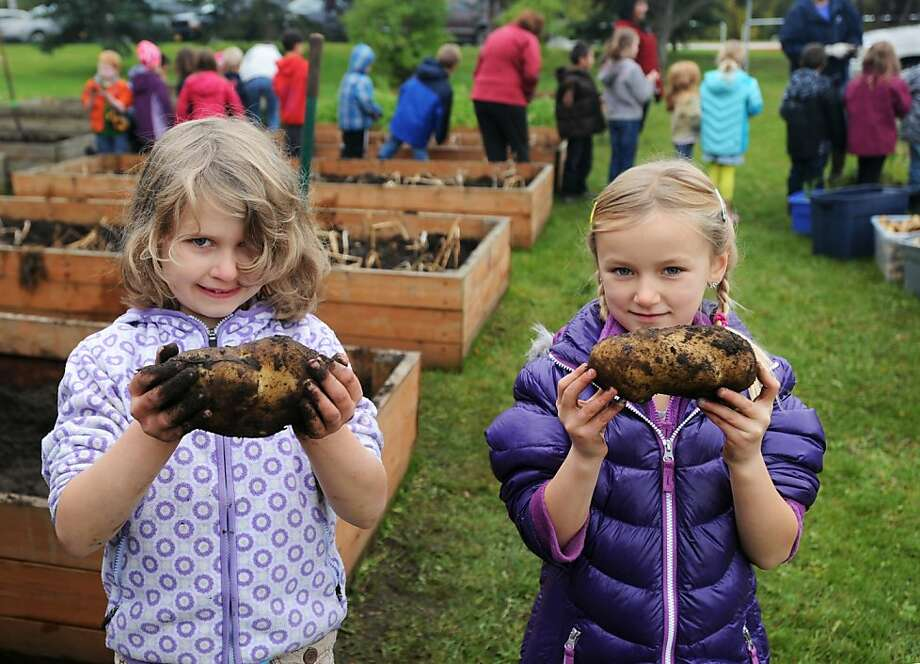 Super-sized spuds: Second-graders Elizabeth Page (left) and Donna Hoffbauer show off tubers they dug up during the annual potato 