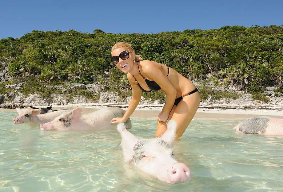 "Bay of pigs: We're not sure why ""Real Housewife of Orange County"" Gretchen Rossi is swimming with swine during the Sandals Emerald Bay celebrity golf event in Great Exuma, Bahamas. Photo: Dimitrios Kambouris, Getty Images For Sandals"