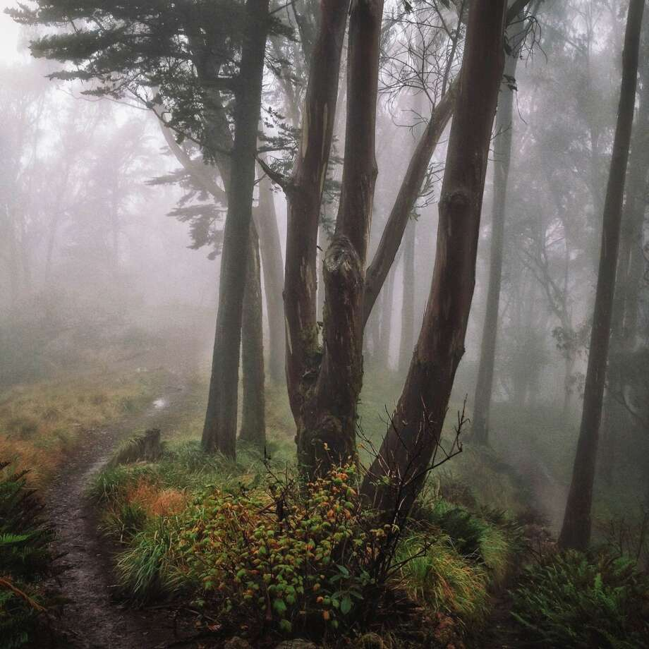 "Samantha Pickertts, who Instagrams as @ravenreviews, took this photo the first time she visited Mt. Davidson. She writes, ""A friend of mine was in town and she suggested we go there at 7am to catch the fog. Such a photogenic and beautiful park."" Photo: Courtesy Of Samantha Pickertts,  @ravenreviews/ Instagram"