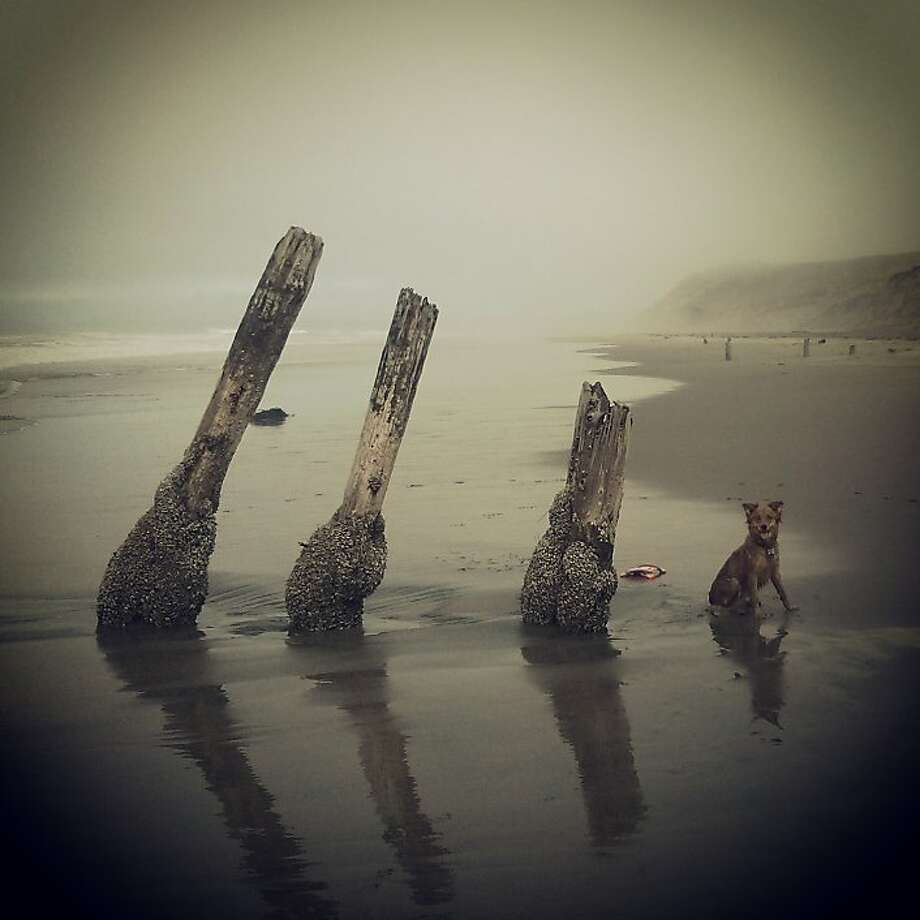 "From the photographer: ""On a drizzly Wednesday at Fort Funston the fog was so thick that I lost track of the path that leads down the sandy log-and-cable staircase, and my dog Foxy and I ended up farther down the beach than we normally go. The beach was deserted, so these pier remnants seemed especially eerie as they emerged from the mist. Foxy took a break from scampering paw-print-sine-waves in and out of the surf just long enough for me to snap this photo. I quickly took a second snapshot for good measure, but by then she'd snapped up her Frisbee and was just a blur of orange fur streaking out of the frame."" @barbieyoga Photo: Barbie Levasseur, Special To The Chronicle"