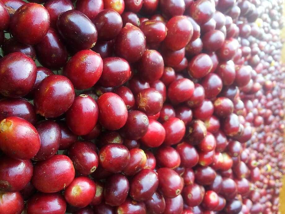 Coffee beans from Big Island Coffee Roasters. Photo: Courtesy Of Big Island Coffee Ro