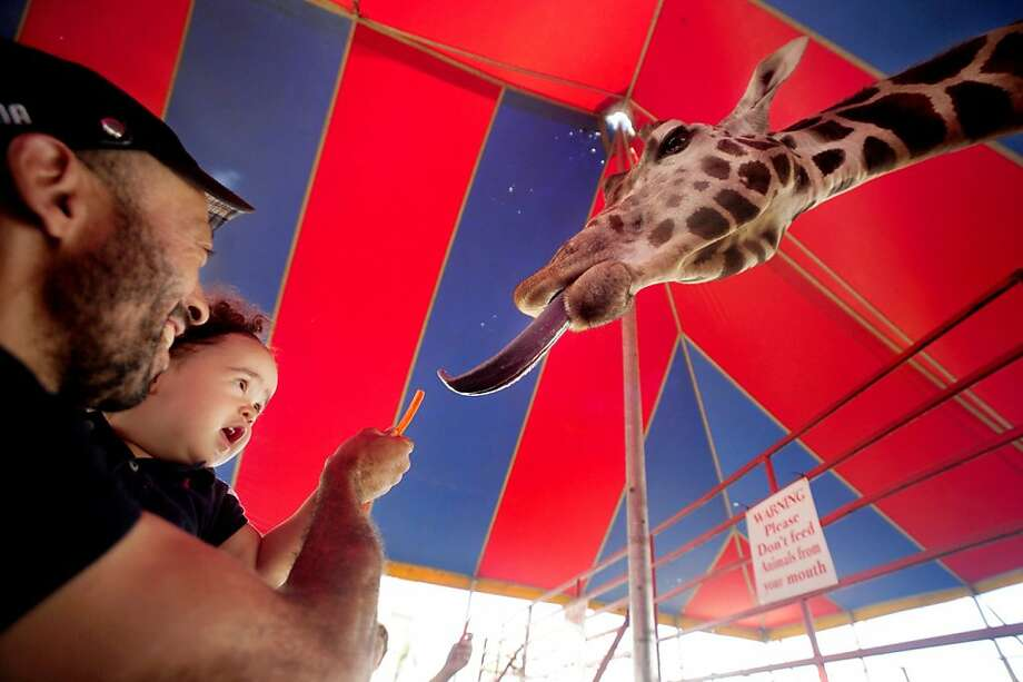 Care for a carrot stick?Alex Batista and his 15-month-old daughter, Anna-Julia, feed a giraffe at the Virginia 