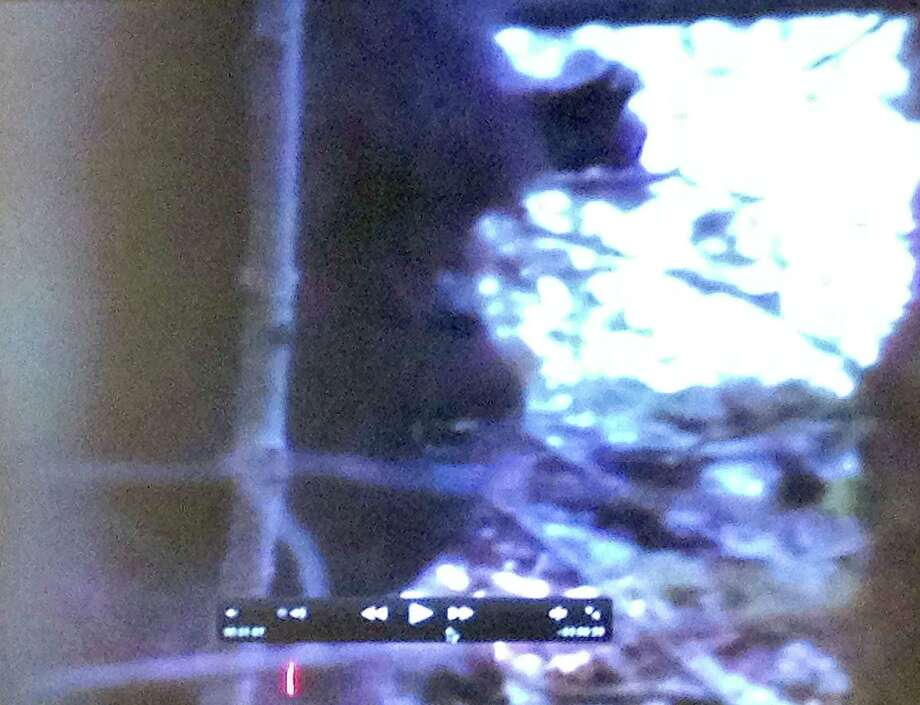 This fuzzy video shown at the Big Foot conference is supposed to be the face of Bigfoot, according to a group of lay researchers who say they have evidence he's out there. Photo: Eric Berger / Houston Chronicle