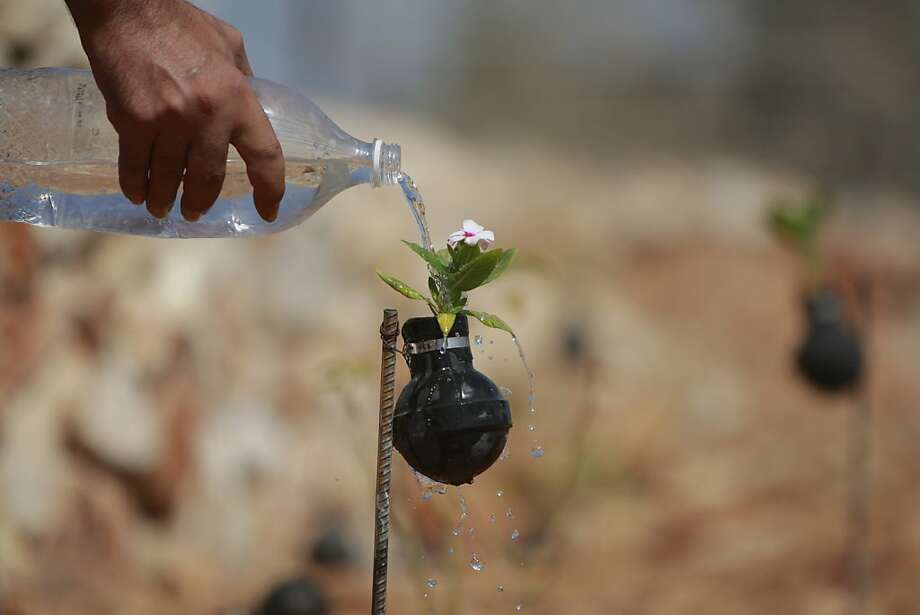Growing flowers from tears:A Palestinian waters a bloom planted in a tear gas canister in the village of Bilin, West Bank. The canisters were collected during years of clashes with Israeli security forces. Photo: Majdi Mohammed, Associated Press