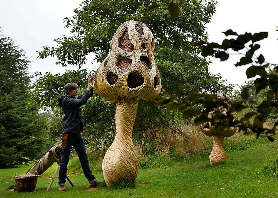 "Willow weaver: Artist Tom Hare creates a mushroom-like sculpture from greenwood willow at Kew Gardens, west of London. He was promoting the ""IncrEdibles Food Festival,"" which begins Friday. Photo: Ben Stansall, AFP/Getty Images"