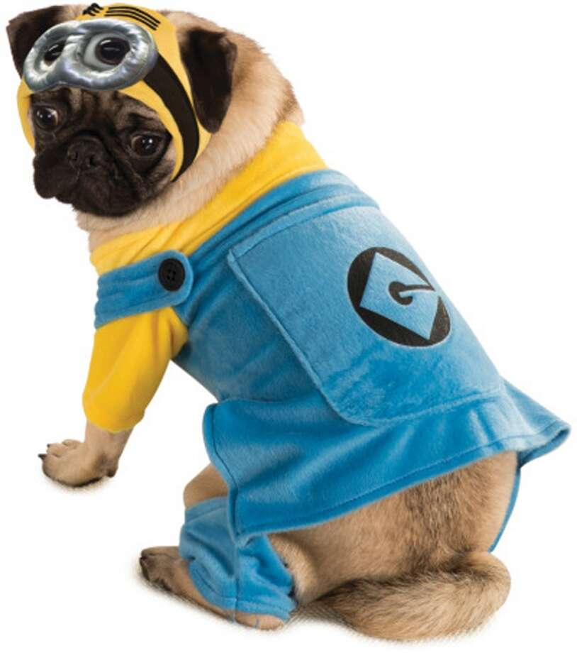 No. 2Minion, for the dog who agrees to dog costume changes with enthusiastic obedience.