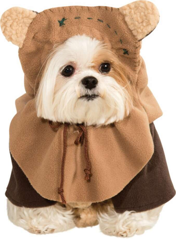 No. 5