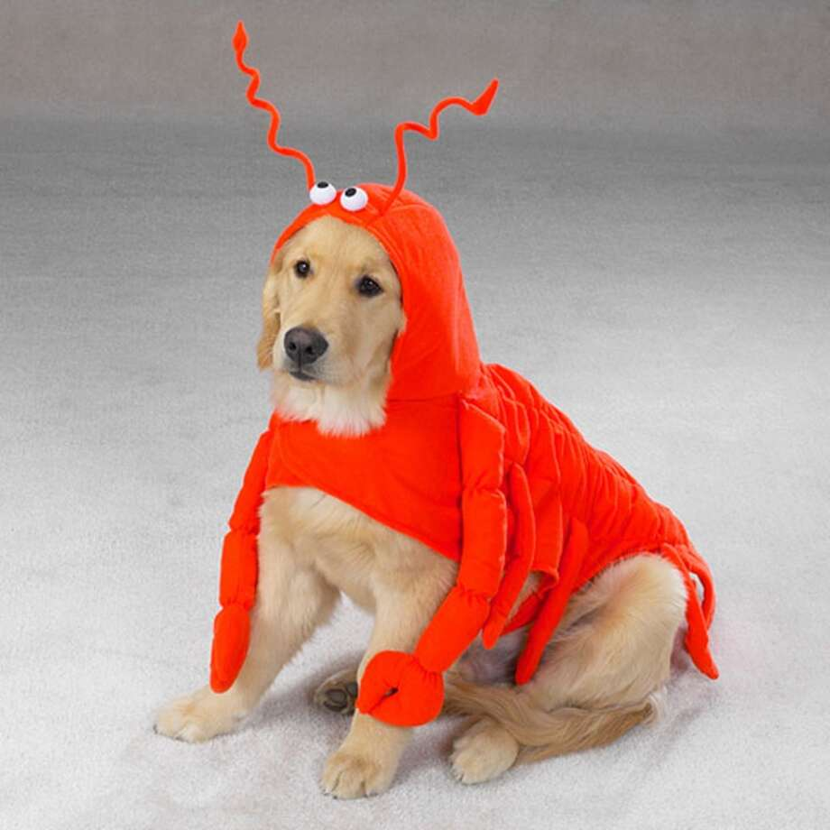 No. 9Lobster, an appropriate punishment for the dog who ate someone's fancy dinner off the counter last week.