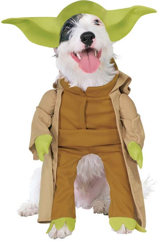 No. 10Yoda, for the dog who has no idea how grammar works. 