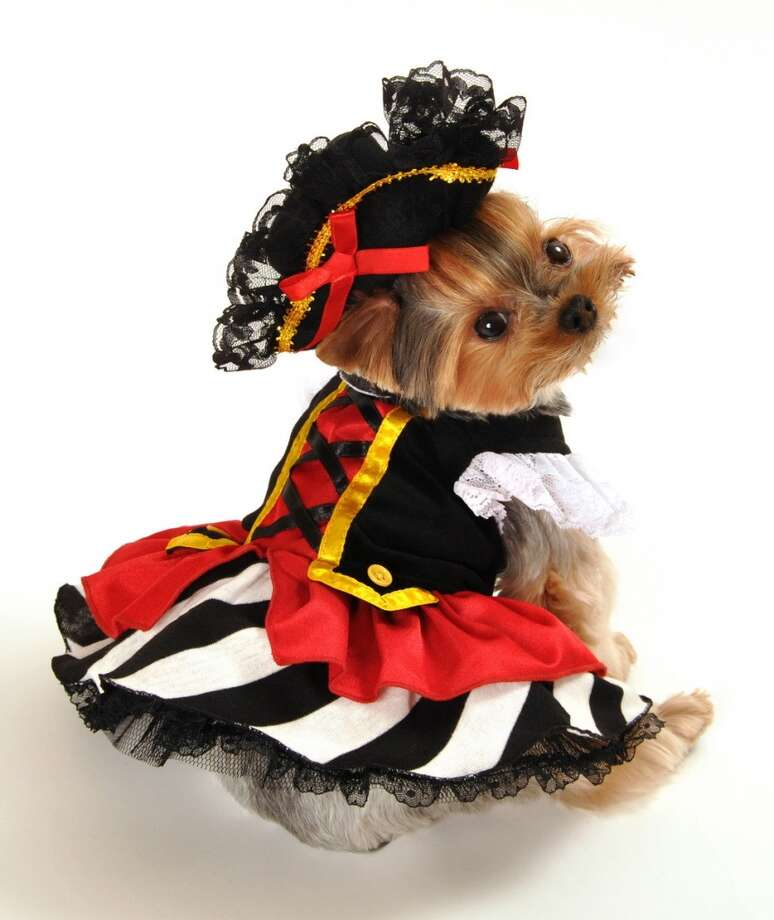 There are several sexy dog costumes available this year. Pirate wench, for instance.