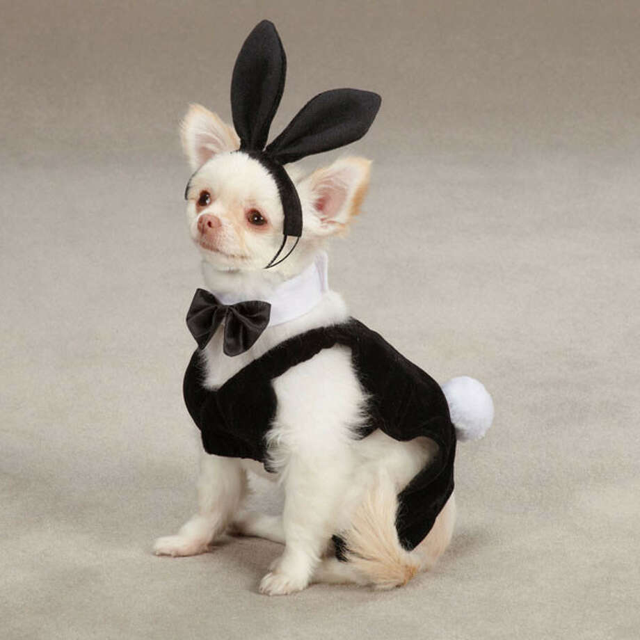 And of course, you can't forget the dog party (we read Playboy) bunny costume. We have to say, the dog chosen as the model does not look ready to party in any way.