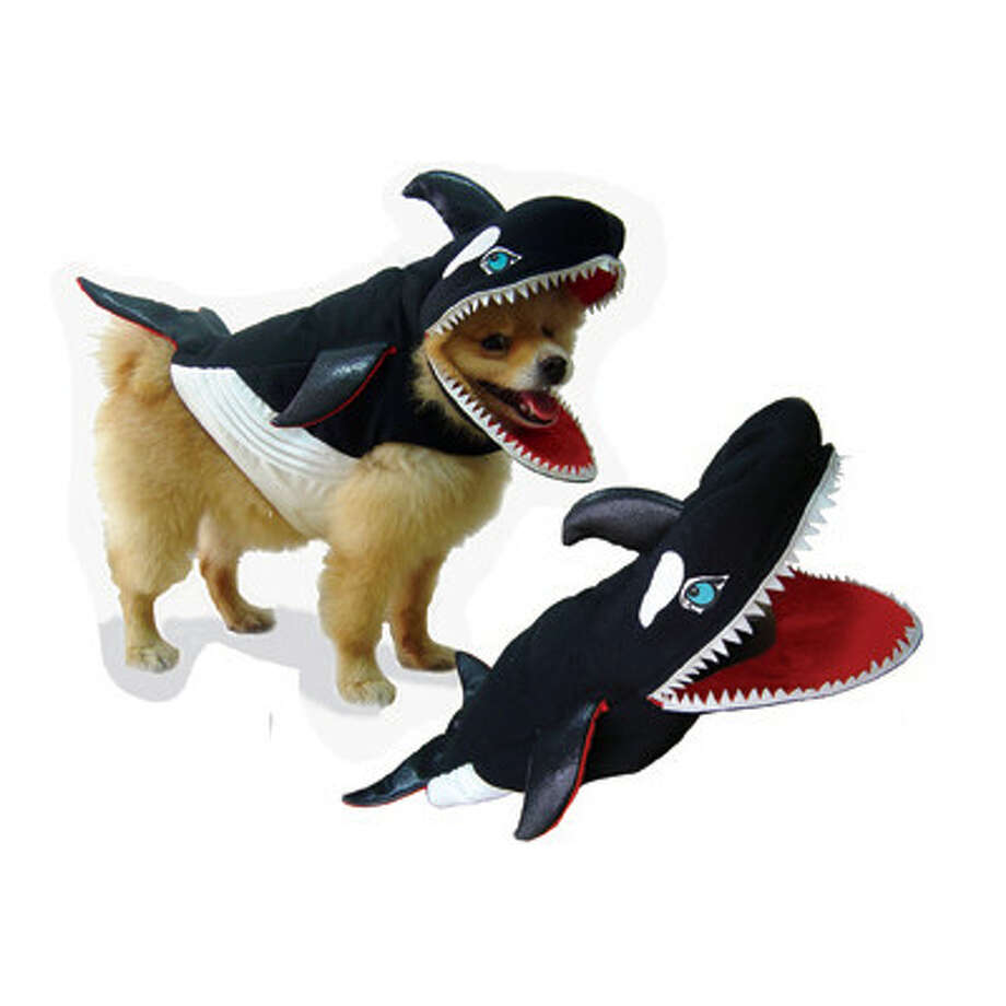 We've always loved the dog shark costume. Dog killer whale is even better, because killer whales are smarter than sharks.
