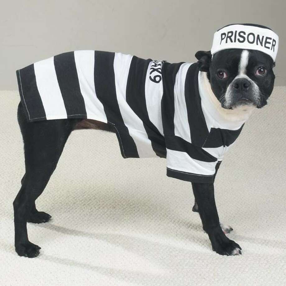 If you're going to imprison your dog in a costume, do it without subtlety or nuance.